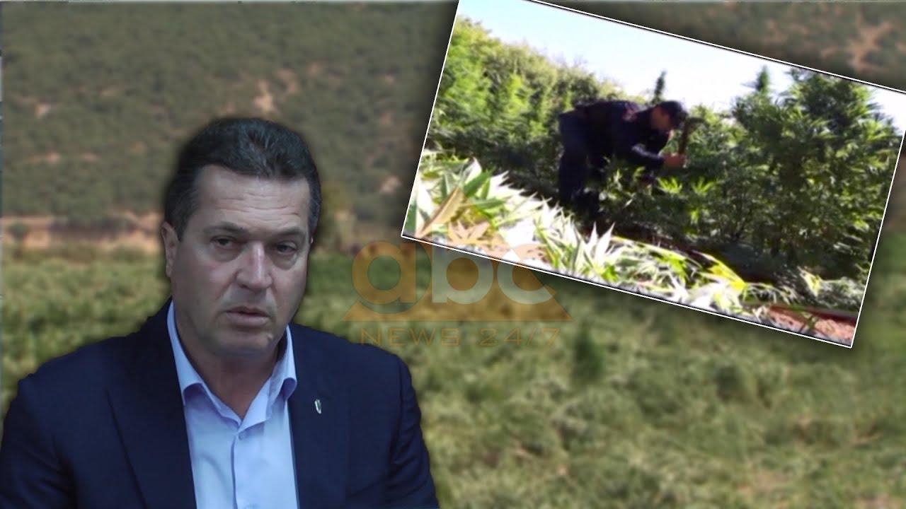 Mbjellja e kanabis në Lezhë, task-forca 0 raste, prefekti Jaku: S'besoj se ky është realiteti
