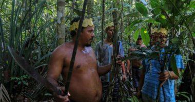 Fisi në Amazonë kuron koronavirusin me mjaltë dhe lëvore pemësh