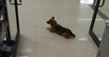 Pronari vdiq nga koronavirusi, qeni vazhdon e pret  në spital edhe pas 3 muajsh