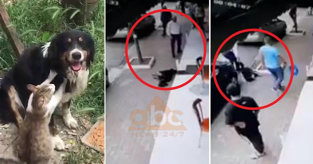 """Ky është """"Troi"""", u vra në mënyrë tragjike para dy ditësh në Tiranë: Shumë qanë për të"""