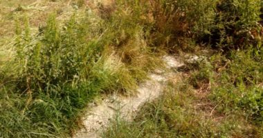 Derdhte mbetjet e përpunimit të qumështit në mjedis, gjobitet pronari i punishtes në Shijak