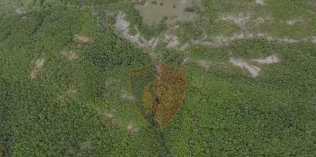 Dronë nga ajri dhe 95 policë ne terren, zbulohet parcela e kanabisit në Këlcyrë