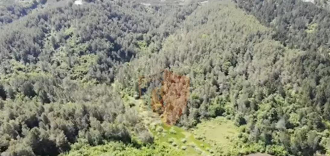 VIDEO/ Operacione anti-drogë, policia kontrolle me dronë nga ajri në pyje