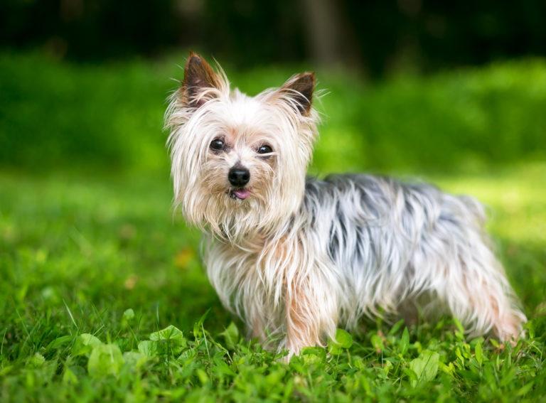 Rrëmbejnë qenin dhe kërkojnë 11 euro: Shpenzojnë 77 euro për ta ushqyer