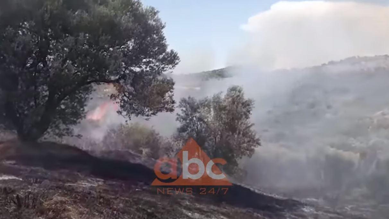 VIDEO/ Marrin flakë ullishtet në Patos, mbërrijnë zjarrfikëset