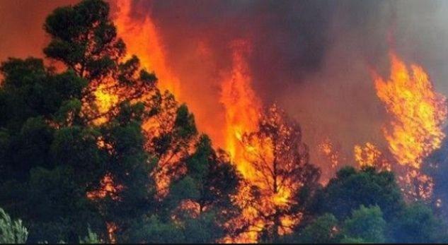 Përfshihet nga zjarri pylli në Lezhë, e pamundur ndërhyrja e zjarrfikësve