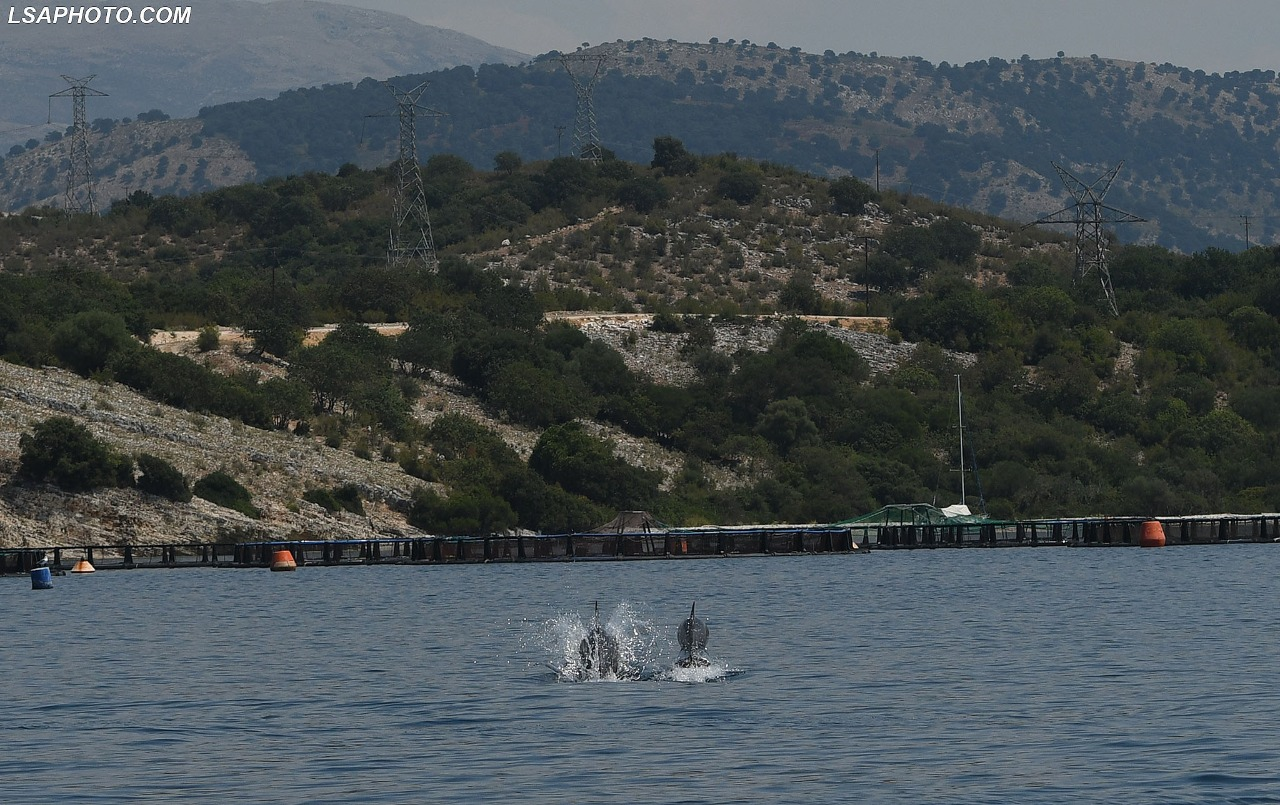 Pamjet emocionuese, shfaqen delfinë në kanalin e Korfuzit