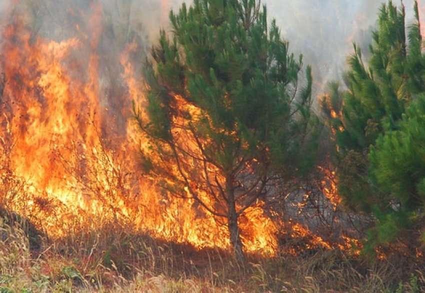 Bie zjarri në pyllin e Roskovecit, digjen disa hektarë me pisha