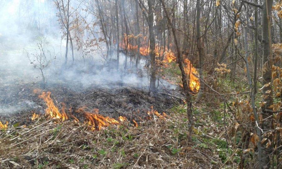 Zjarret në vend, 200 efektivë të Forcave të Armatosura në terren
