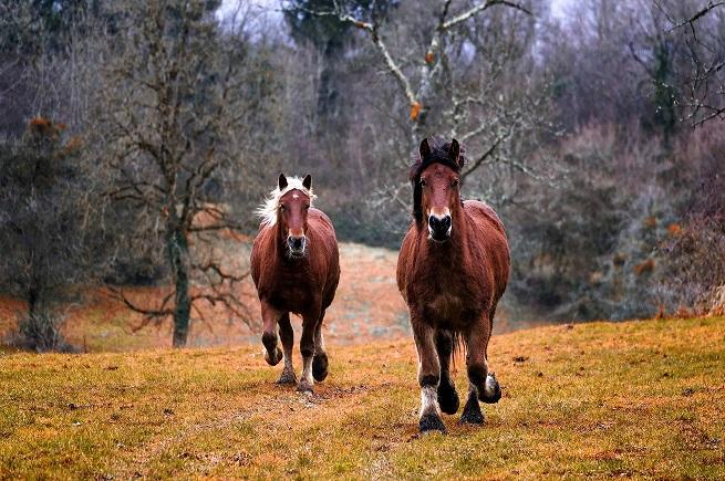 Greqia ndalon therjen e kuajve dhe përdorimin e mishit të tyre për prodhime të ndryshme