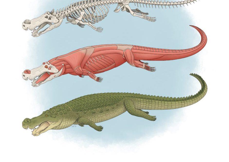 """Toka ishte dikur shtëpi e """"krokodilëve të tmerrit"""", me një gjatësi prej 33 metrash"""