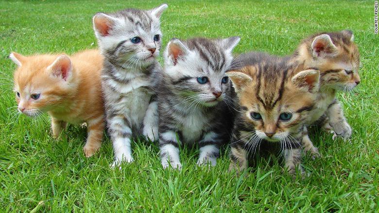 Studimi: Si ndikojnë kafshët në shëndetin e njeriut
