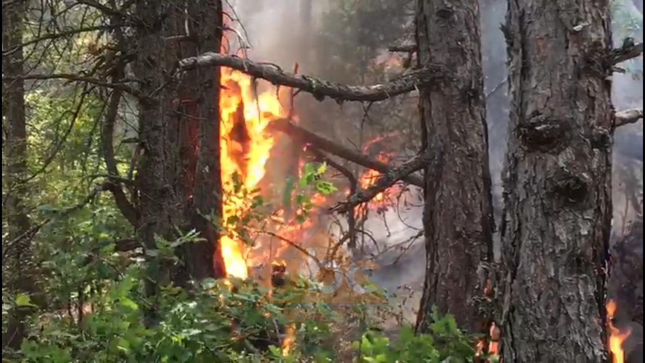 Zjarr në Korçë, flakët përfshijnë një masiv pyjor