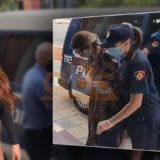 VIDEO/ U kap me dy pistoleta, Fjolla Morina e shoqëruar nga policia del para gjykatës