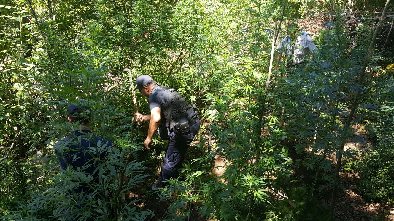 Guardia di Finanza kontrolle nga ajri për lëndë narkotike në Elbasan dhe Librazhd