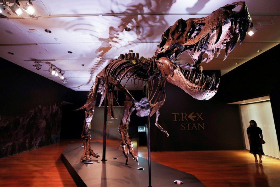40 metra i gjatë, del në shitje skeleti i një dinosauri