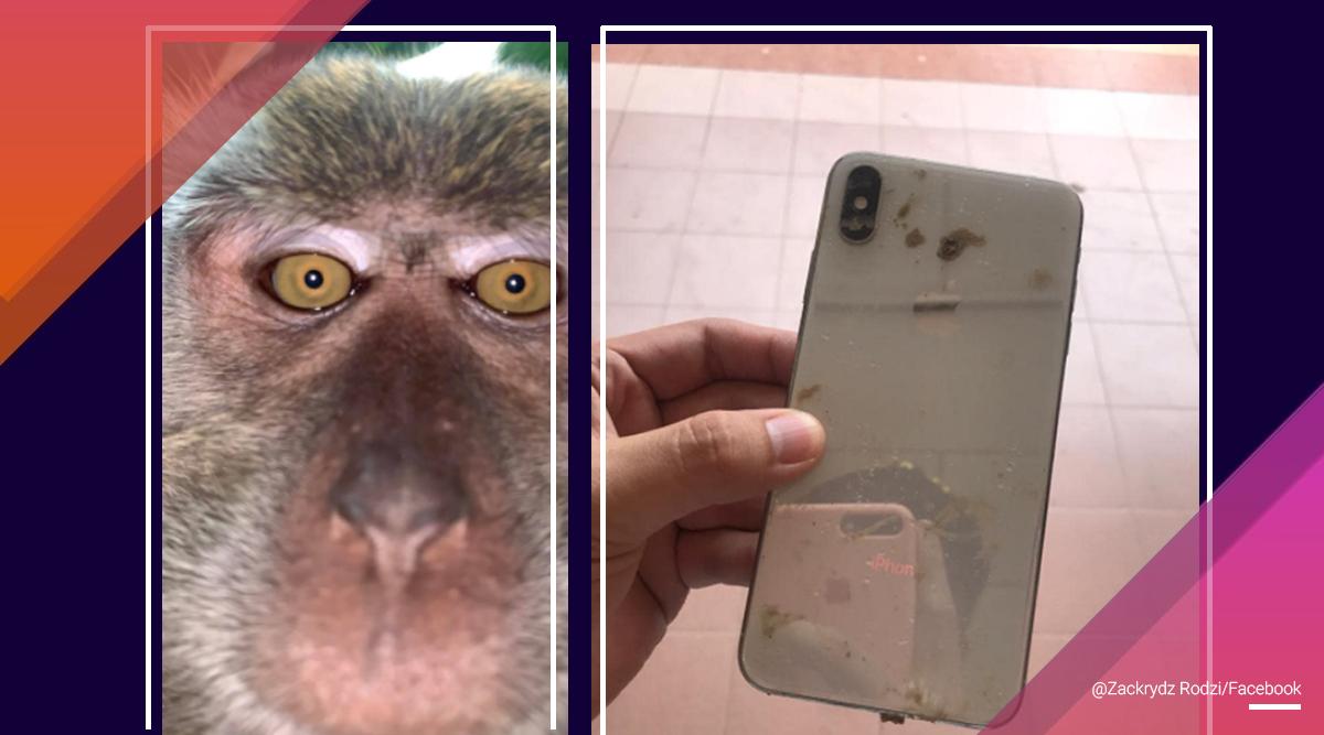 """Majmuni """"rrëmben"""" telefonin për të shkrepur disa selfie"""