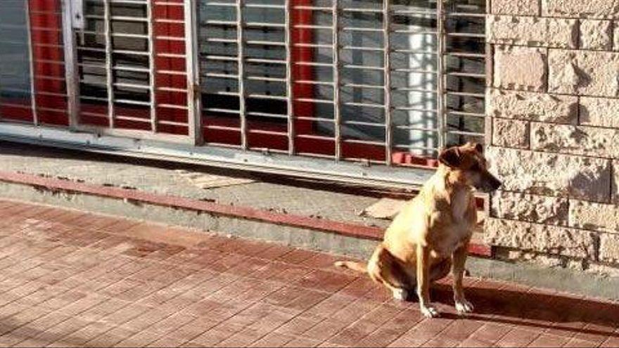 FOTO/ Qeni pret pronaren e ndjerë prej ditësh para punës