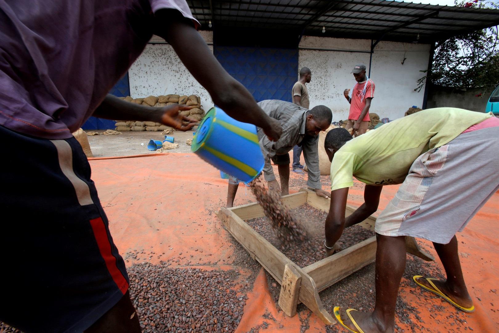 1.5 milion fëmijë punojnë në industrinë e çokollatës