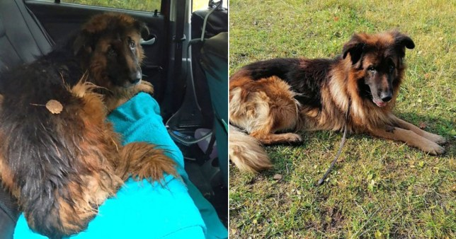 Pronarët e groposën se ishte sëmurë, qeni arrin të shpëtojë për mrekulli