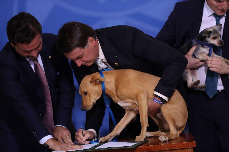 Me qenin e tij pranë, presidenti brazilian nënshkruan ligjin kundër keqtrajtimit të kafshëve
