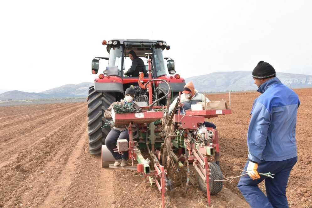 Naftë pa akcizë dhe taksa, miratohet fondi për fermerët
