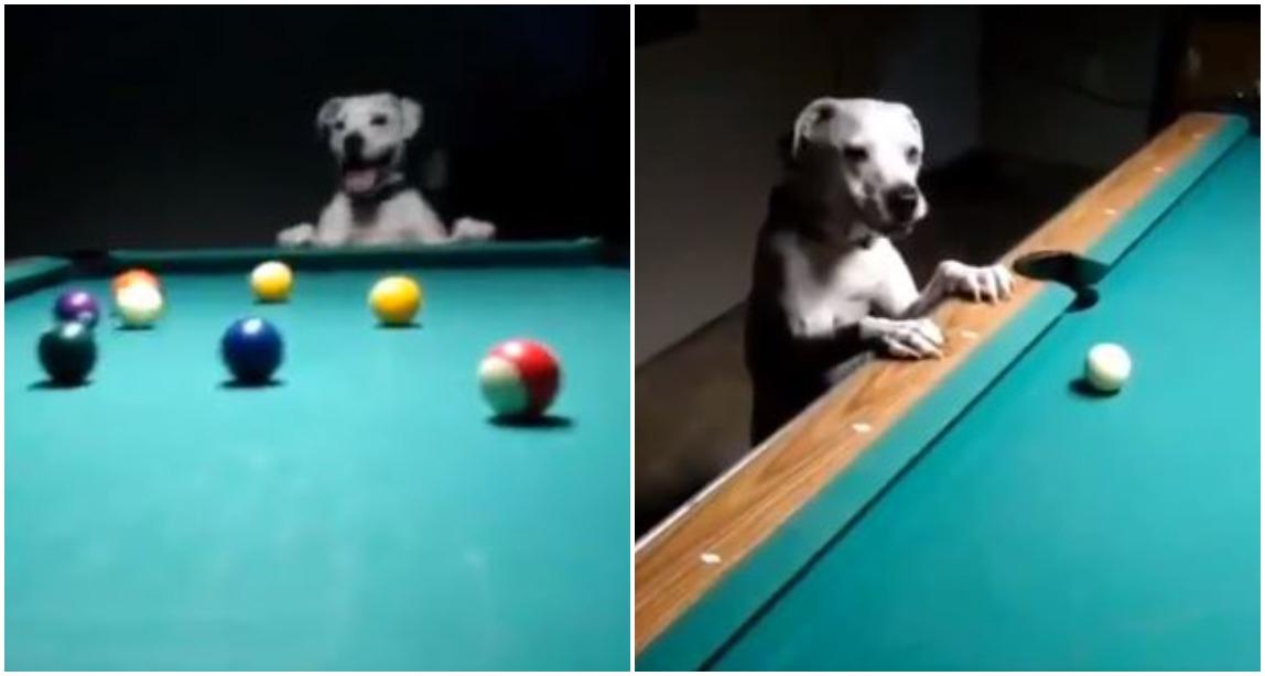 Video e pabesueshme: Qeni luan bilardo si një profesionist