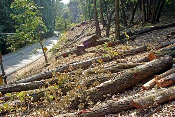 Prerja e paligjshme e pyjeve në Korçë, arrestohen 4 persona