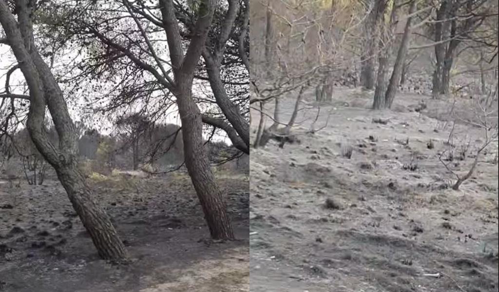 """VIDEO/ """"Shuhet"""" pylli i Semanit, masivi i pishave i shkrumbuar nga zjarri"""