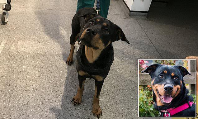 Ofendoi qenin e tij, gjykata në Angli dënon të zotin