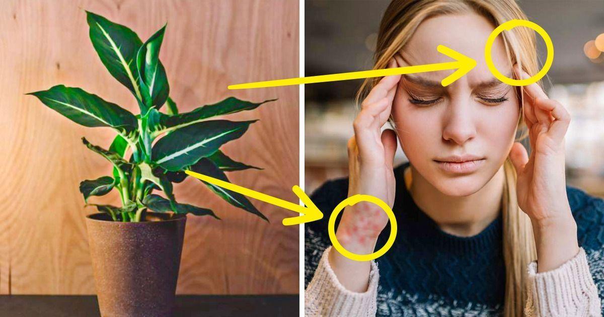 Lulet që mund të kenë efekte negative në shëndetin tuaj
