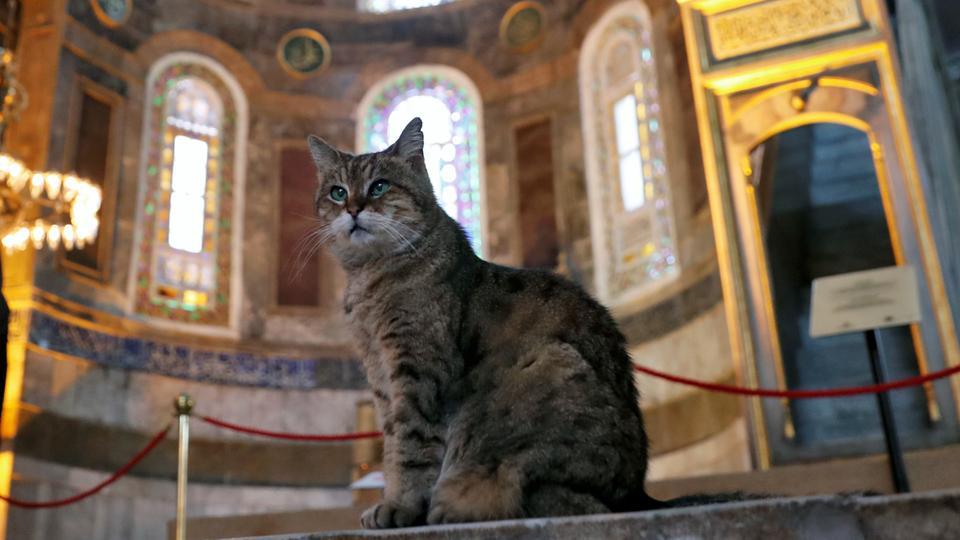 E njohur me emrin Gli, ngordh macja e famshme e xhamisë 'Shën Sofia'