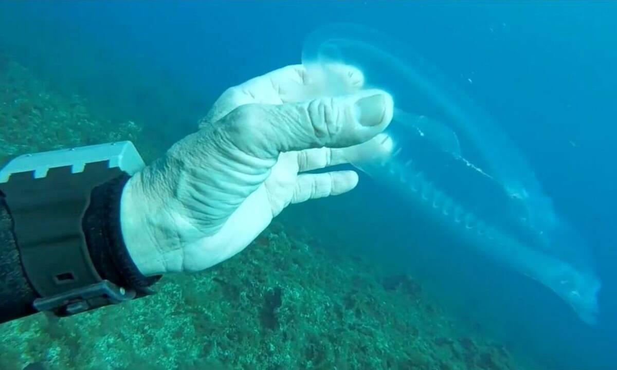 """Zbulohet peshku i rrallë """"fantazmë"""""""