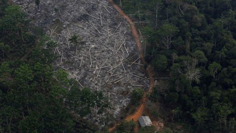 Shpyllëzimi në Amazonë arrin nivelet më të larta që nga viti 2008