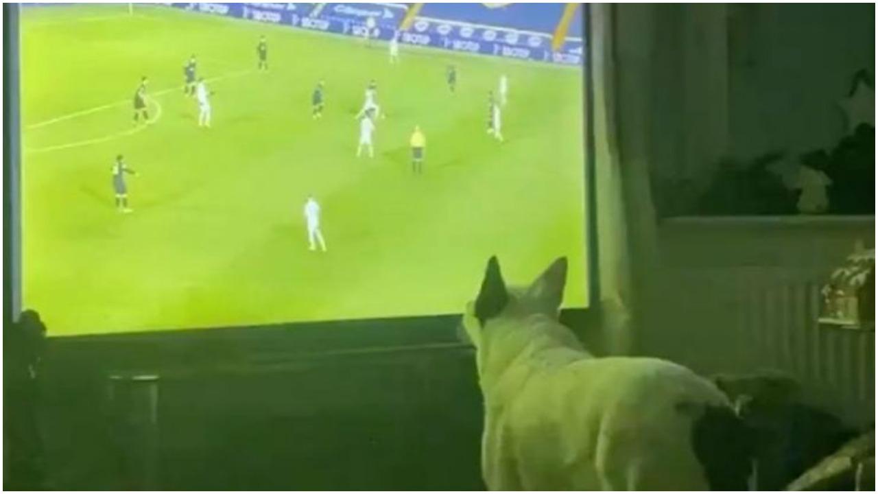 VIDEO/ Spektakolare festa e tifozit special, goli i Leeds lumturon… qenin