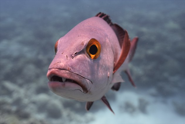 I lindur gjatë Luftës së II Botërore, shkencëtarët zbulojnë peshkun 81-vjeçar