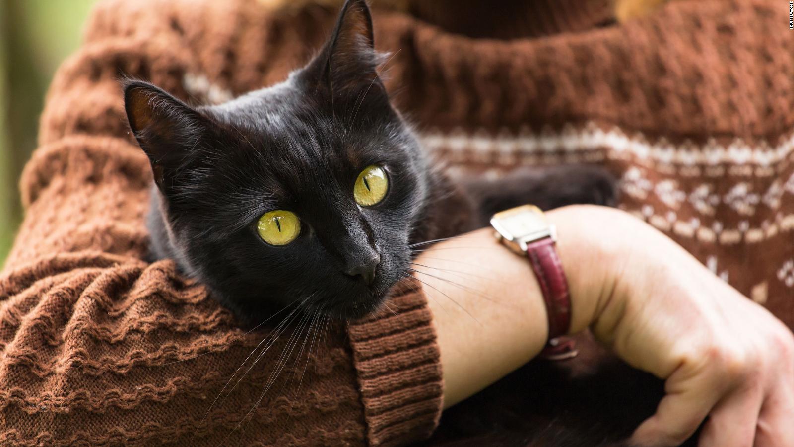 Rasti i parë në Korenë e Jugut, macja rezulton pozitive me Covid-19