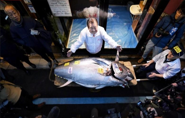 E pazakontë/ Peshku pendë blu shitet 202 mijë dollarë në ankand