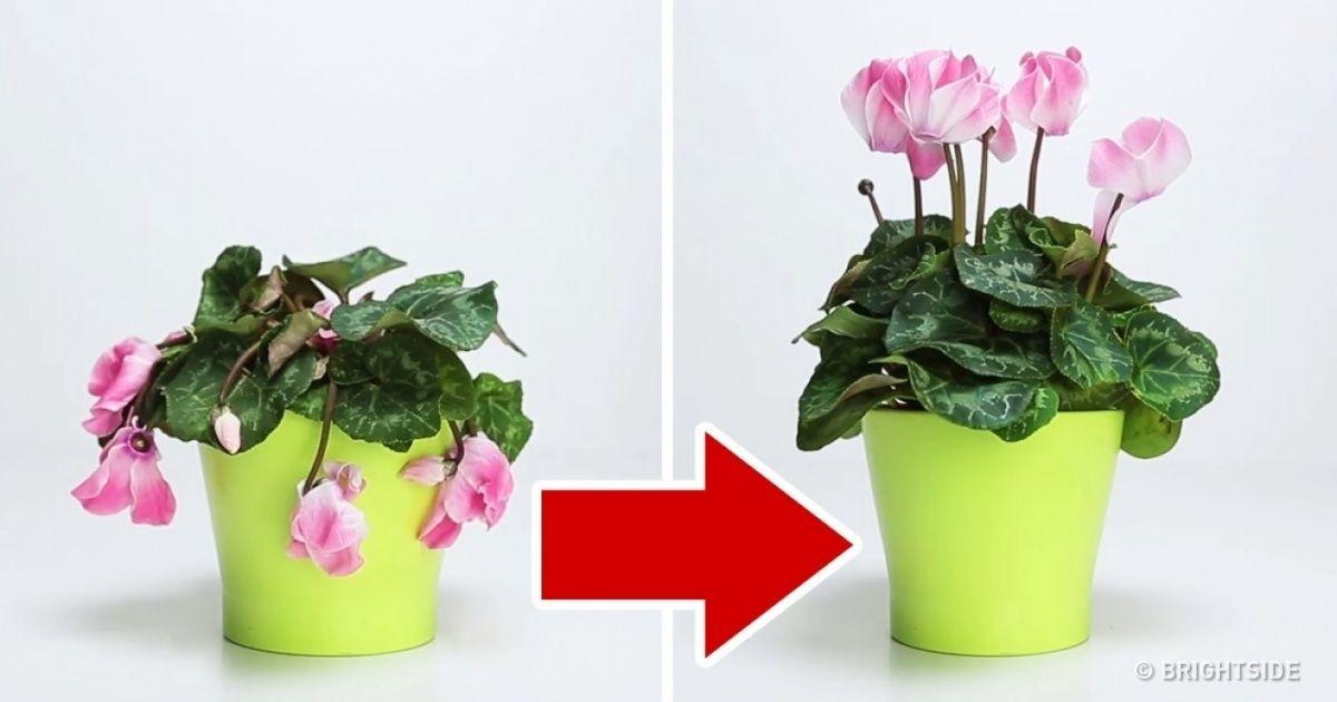 3 përbërës që do të rikthejnë në jetë lulet e vyshkura