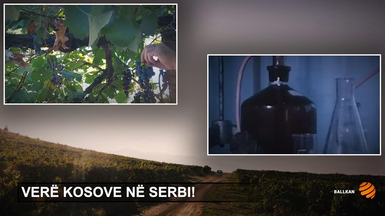 Përtej politikës: Verë Kosove në Serbi