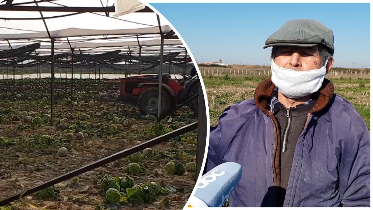 Acari dëmton serat në Fier, fermerët në vështirësi: Dëmet janë të konsiderueshme