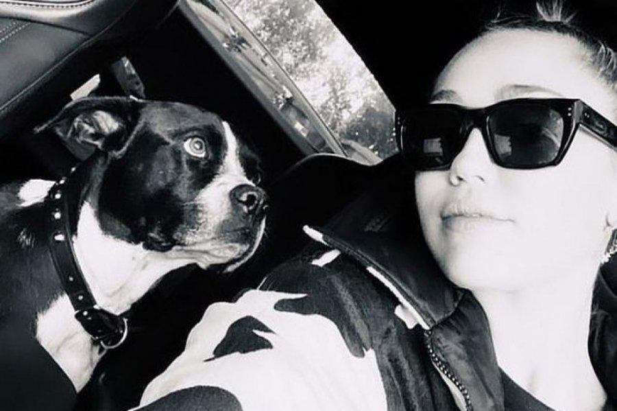 Humbi betejën me kancerin, ylli i muzikës i dedikon këngë qenit