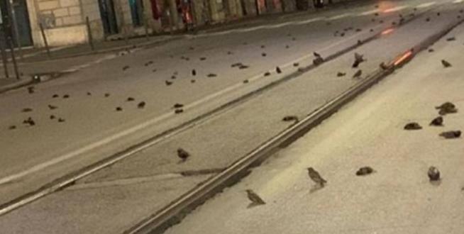 Fishekzjarret e natës së ndërrimit të viteve, qindra zogj ngordhin në qendër të Romës