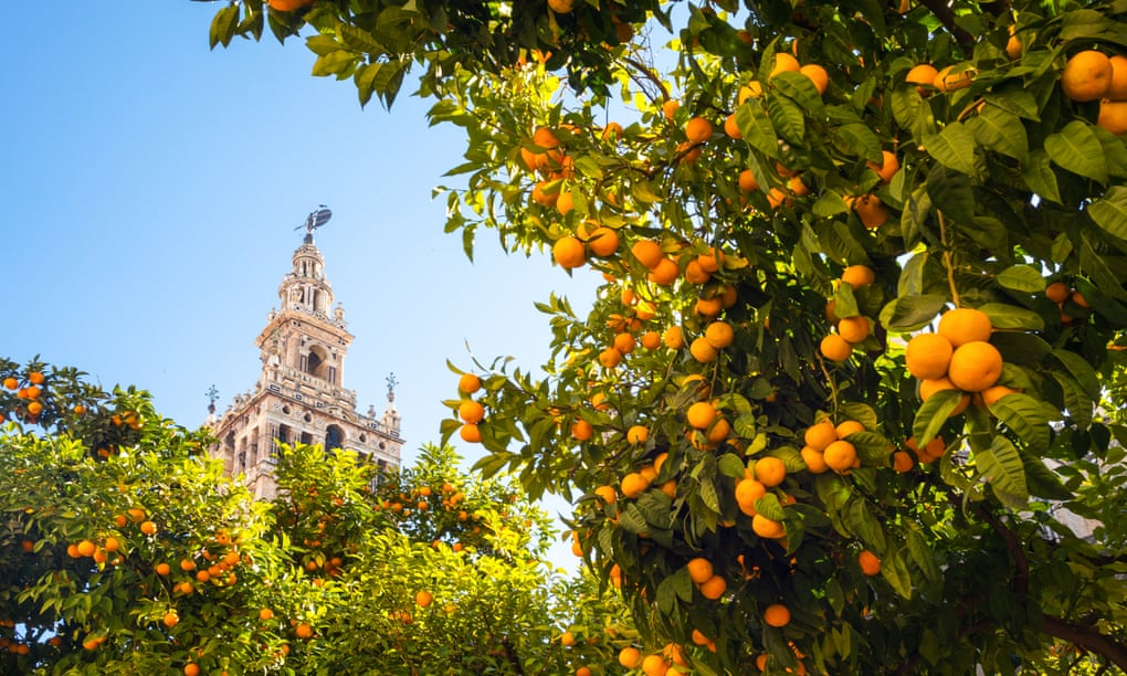 Për t'u marrë shembull/ Si ky qytet spanjoll po i kthen portokallet e mbetura në energji elektrike