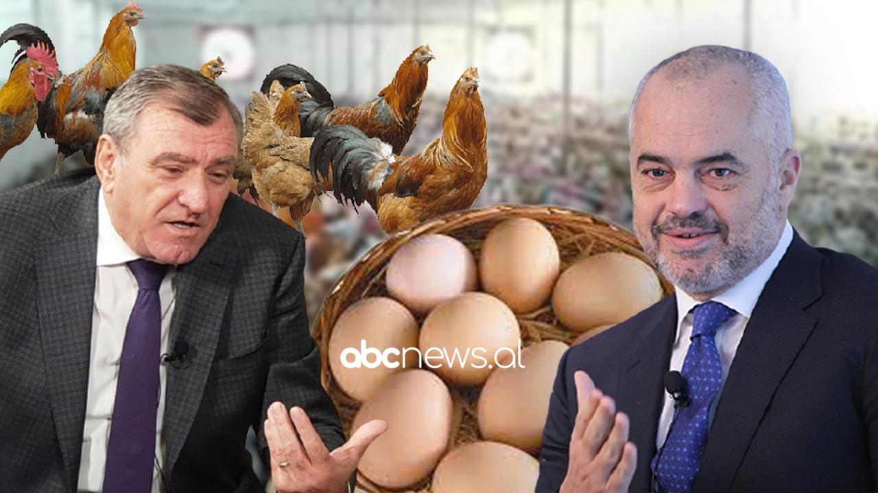 """Më mirë veza e Ramës sot apo pula e Dukës mot? """"Box Pop"""" në Abcnews.al"""