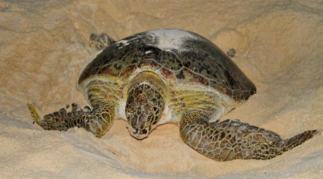 Hëngrën mish breshke, humbin jetën 19 persona në Afrikë, mes tyre edhe fëmijë
