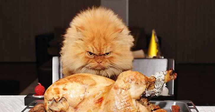 Pse disa njerëz zemërohen kur janë të uritur?