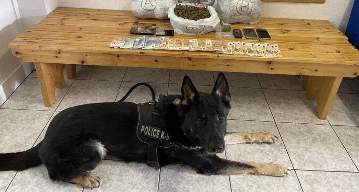 I zbuloi qeni anti-drogë, shqiptarët kapen me kanabis në Greqi
