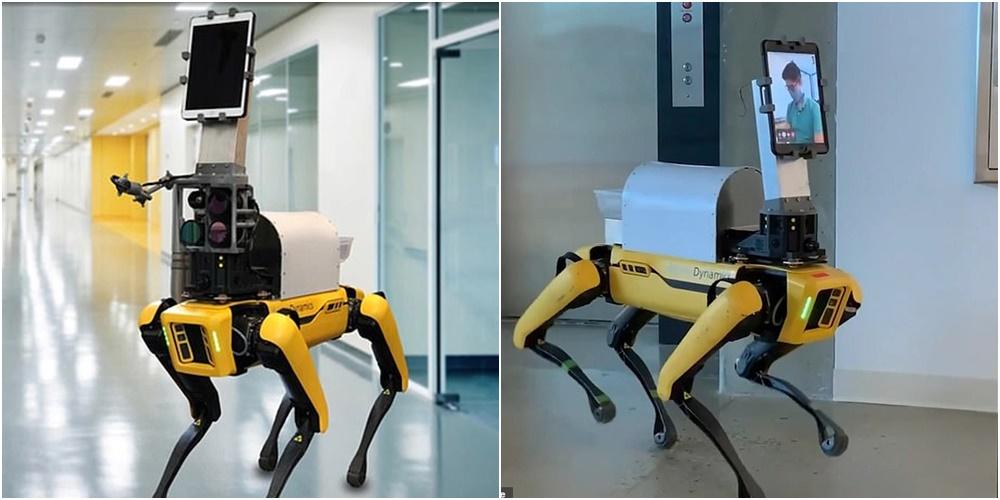 """Ky është """"qeni"""" që ndihmon mjekët të vizitojnë pacientët me Covid-19 në izolim"""