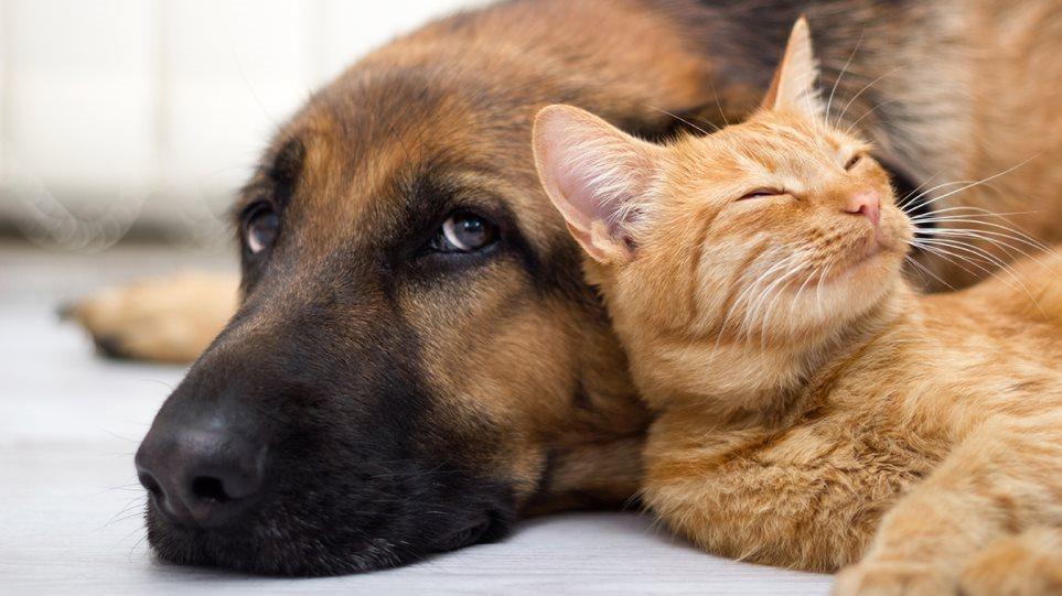 E para në botë, Rusia prodhon vaksinën anti-Covid për kafshët